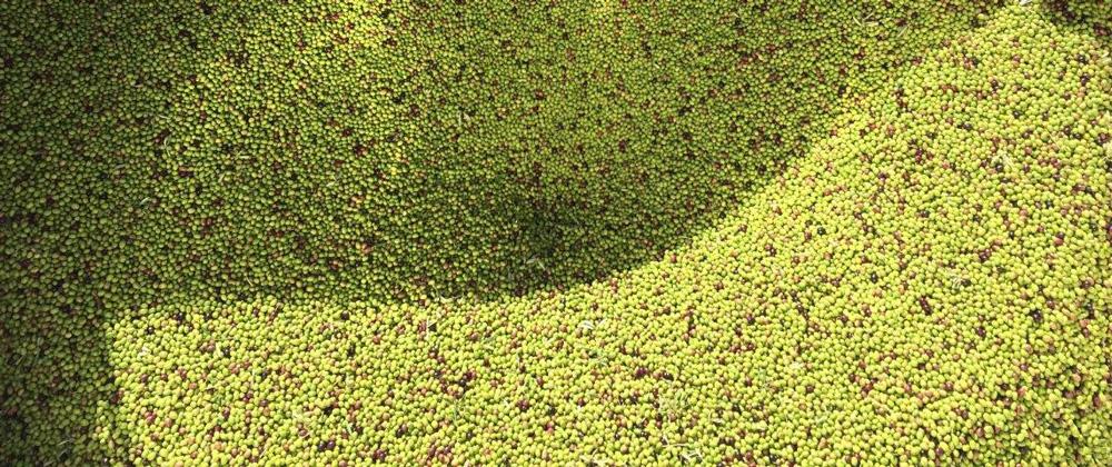 El Aceite de oliva y la salud